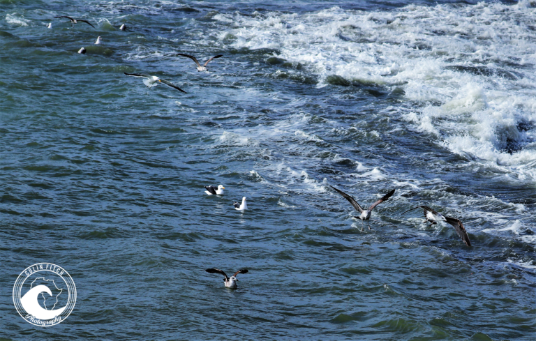 Sea Gulls in at Safe spot inside the Cape Town harbor.