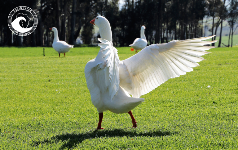 Spread your wings a little.