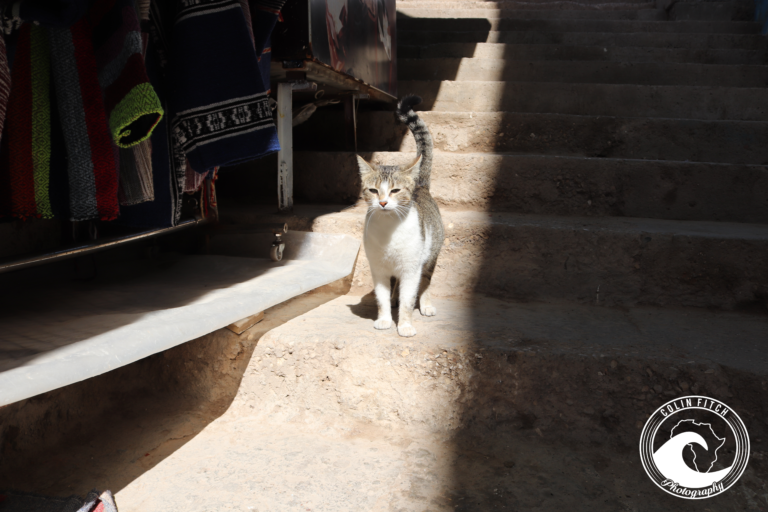 An Alleycat in an Alleyway