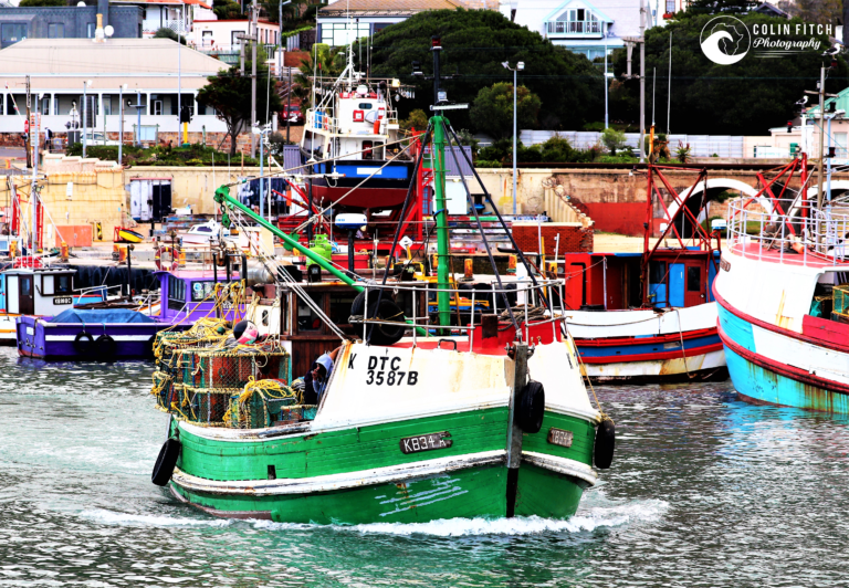 Kalk Bay Boat - Picture 5