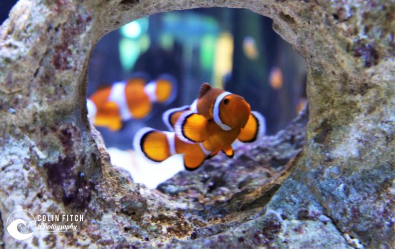 Cape Town Aquarium 3.