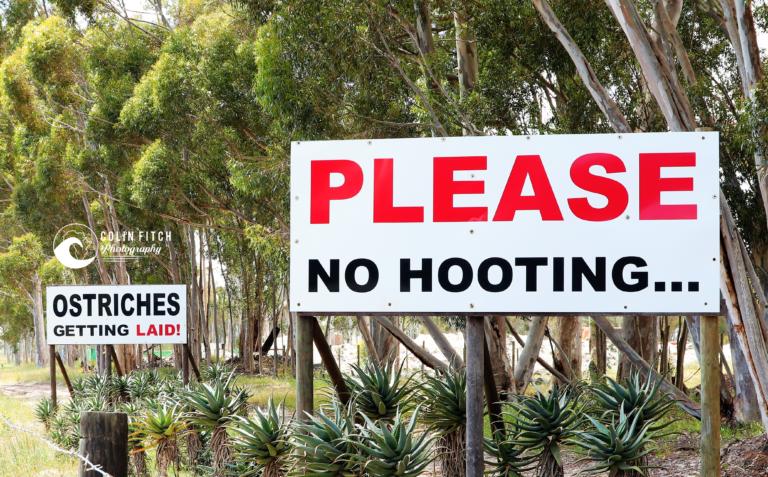 No hooting please